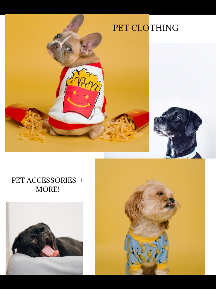 Best Pet Clothing and Accessories