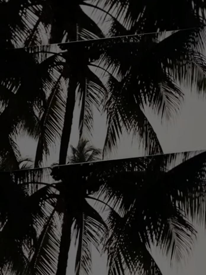 LSSAN Palm